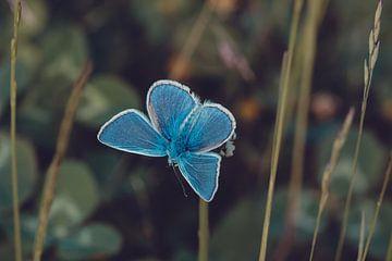 Blauw in de natuur van Bernardine de Laat