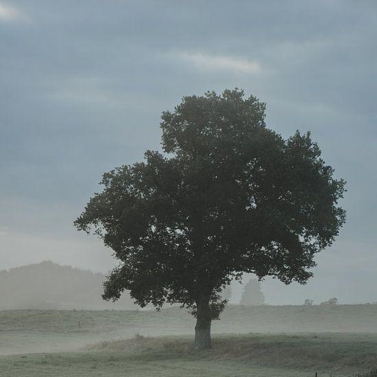 Boom op een mistige ochtend van Paulien van der Werf