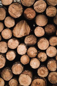 Opgestapelde boomstammen op de Veluwe van Nanda van der Eijk