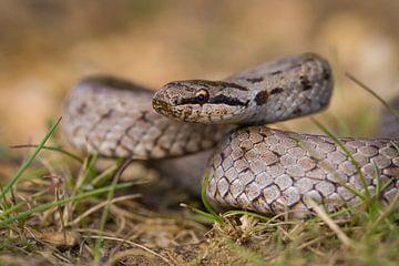 oplettende gladde slang van