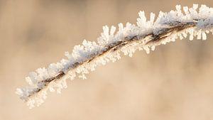 IJskristallen op een gras halm