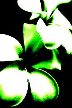 Contraste des fleurs (vert)