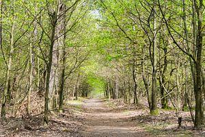 Deelerwoud, natuur, veluwe van Wessel Dekker
