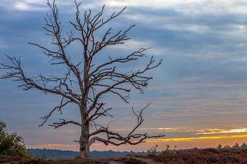 Baum auf Posbank von Paul Vergeer