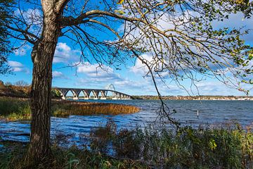 Eine Brücke zwischen Seeland und Møn in Dänemark von Rico Ködder