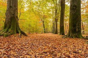 Herbst auf dem Landgut Visdonk bei Roosendaal