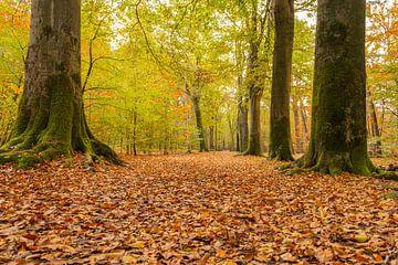 Herbst auf dem Landgut Visdonk bei Roosendaal von Jan Poppe