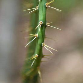 cactus van Rachel Beijkirch