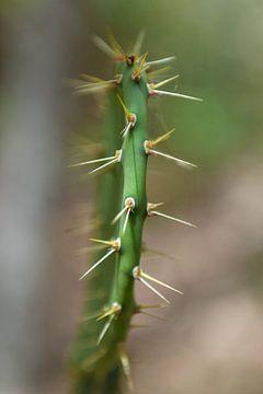 cactus von Rachel Beijkirch