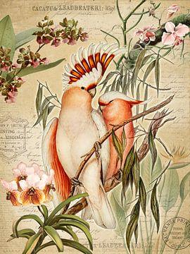 Orchideenparadies von christine b-b müller