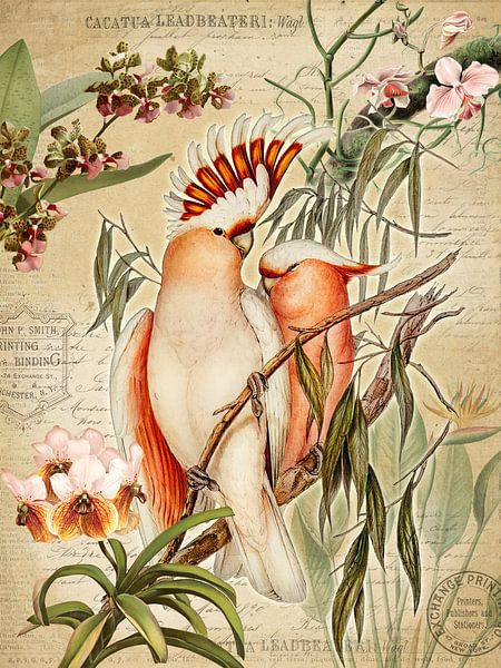 Le paradis des orchidées sur christine b-b müller