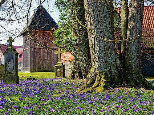 Crocus in Flower in Front of the Medieval Church van Gisela Scheffbuch