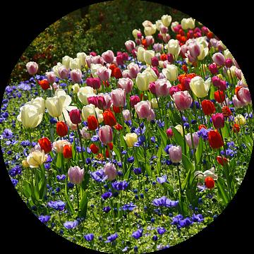 Tuin met tulpen van Peet Romijn