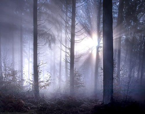 Sprookjesachtige zonnestralen met mist in het bos van Frahan