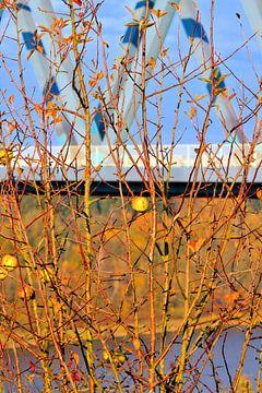 Herfst van Ines Thun