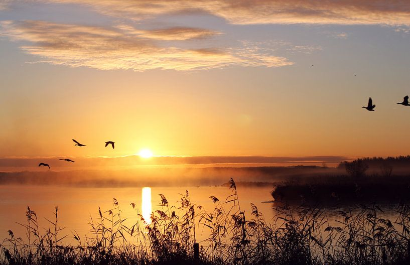 Sunrise near Wapserveen van Hielke Roelevink
