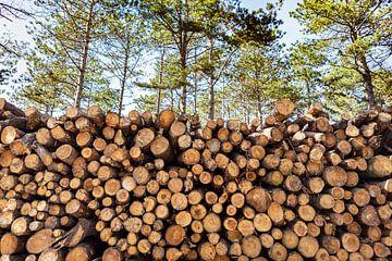 Stapel met boomstammen van Evelien Oerlemans
