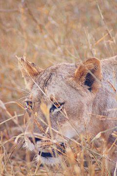 Leeuw in het gras van Cinthia Mulders