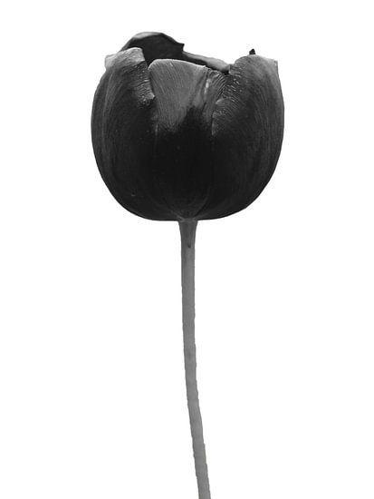 Zwarte tulp van Jessica Berendsen