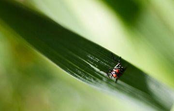 Die Fliege von Eus Driessen