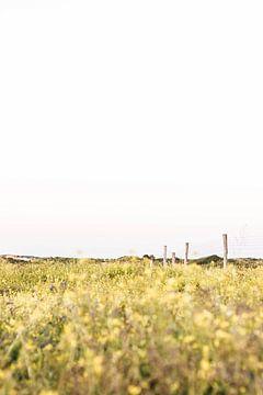 Leuchtend gelbe Dünenvegetation im Nationalpark South Kennemerland von Simone Neeling