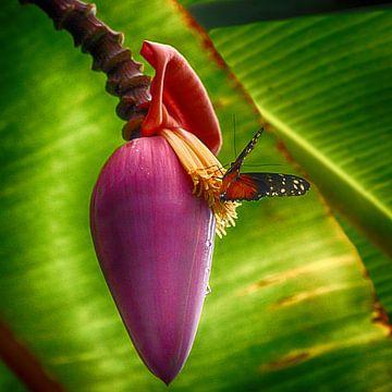 Schmetterling: Farbe, Freiheit und Liebe von FotoGraaG Hanneke