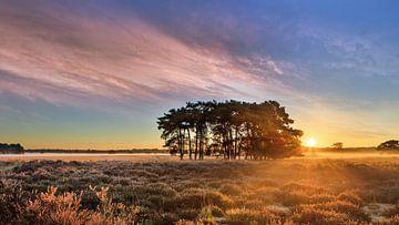 Sonnenaufgang mit dramatischen Wolken auf einem Heide mit Bäumen von Tony Vingerhoets
