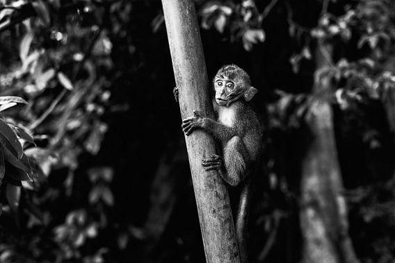 Monkey Business I van Jesse Kraal