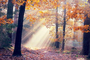 light from heaven...  van Els Fonteine