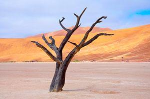 Kunstzinnige wind in de woestijn...