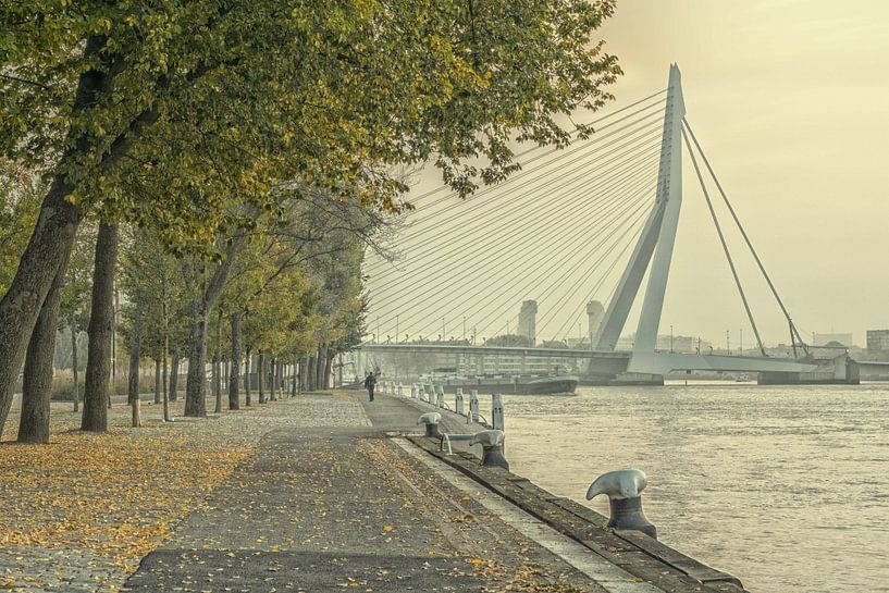 Herfst in Rotterdam van Henri van Avezaath