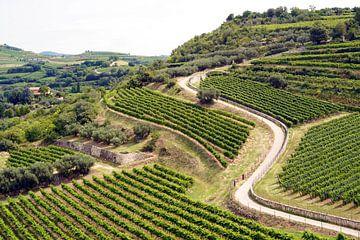 Kronkelende weg doorheen Franse wijngaarden van Tom Van Dyck