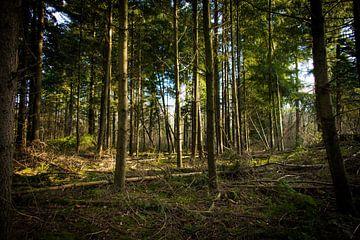 Het bos als een behang van Alex Hiemstra