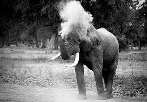 Elephant Blowing Dust