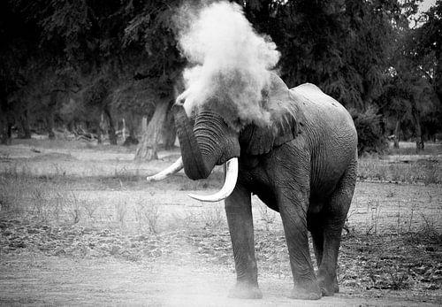 Elephant Blowing Dust van