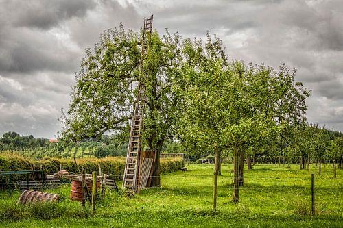 Houten ladder in Hoogstamboomgaard