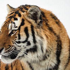 Siberische tijger van Eye to Eye Xperience By Mris & Fred