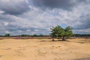 Boom in het zand op de Veluwe van Merijn Loch