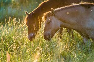 Twee lieve paarden