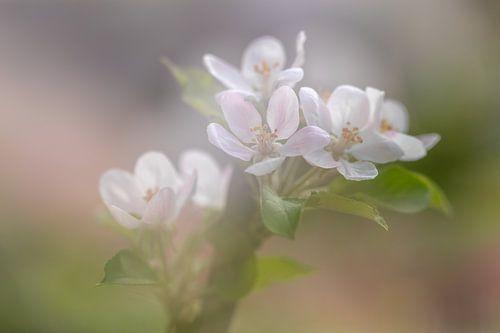 Bloeiend appelboompje van Karla Leeftink