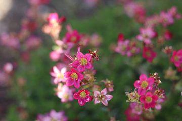 Bloemen in zonlicht von Jacqueline Holman