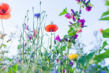 Wilde Sommerblumen 12 von FotoDennis.com