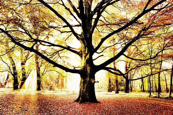Autumn van bob brunschot