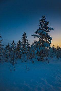 Bossen Finland van Andy Troy
