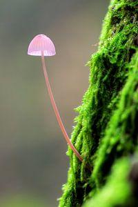 Roze paddenstoeltje op een mossige boom