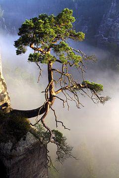 Eenzamer boom van Jana Behr
