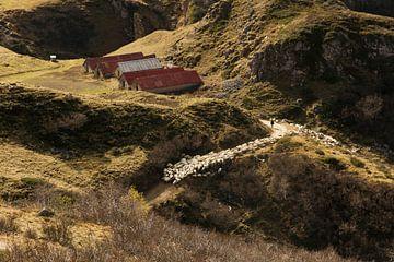 De schapenherder en zijn kudde van Nathan Marcusse