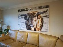 Klantfoto: Schotse hooglander van Hans Brasz, op canvas