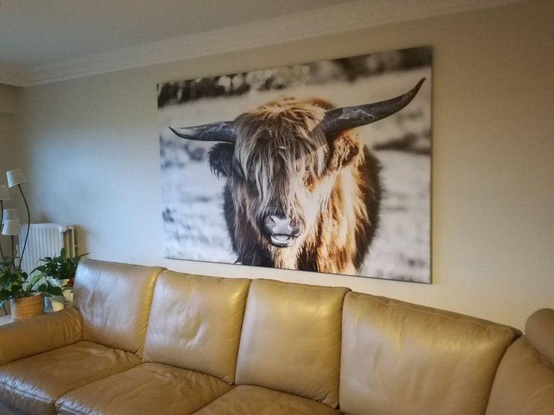 Klantfoto: Schotse hooglander van Hans Brasz