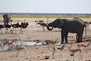 Het dierenrijk van Afrika van R.Phillipson
